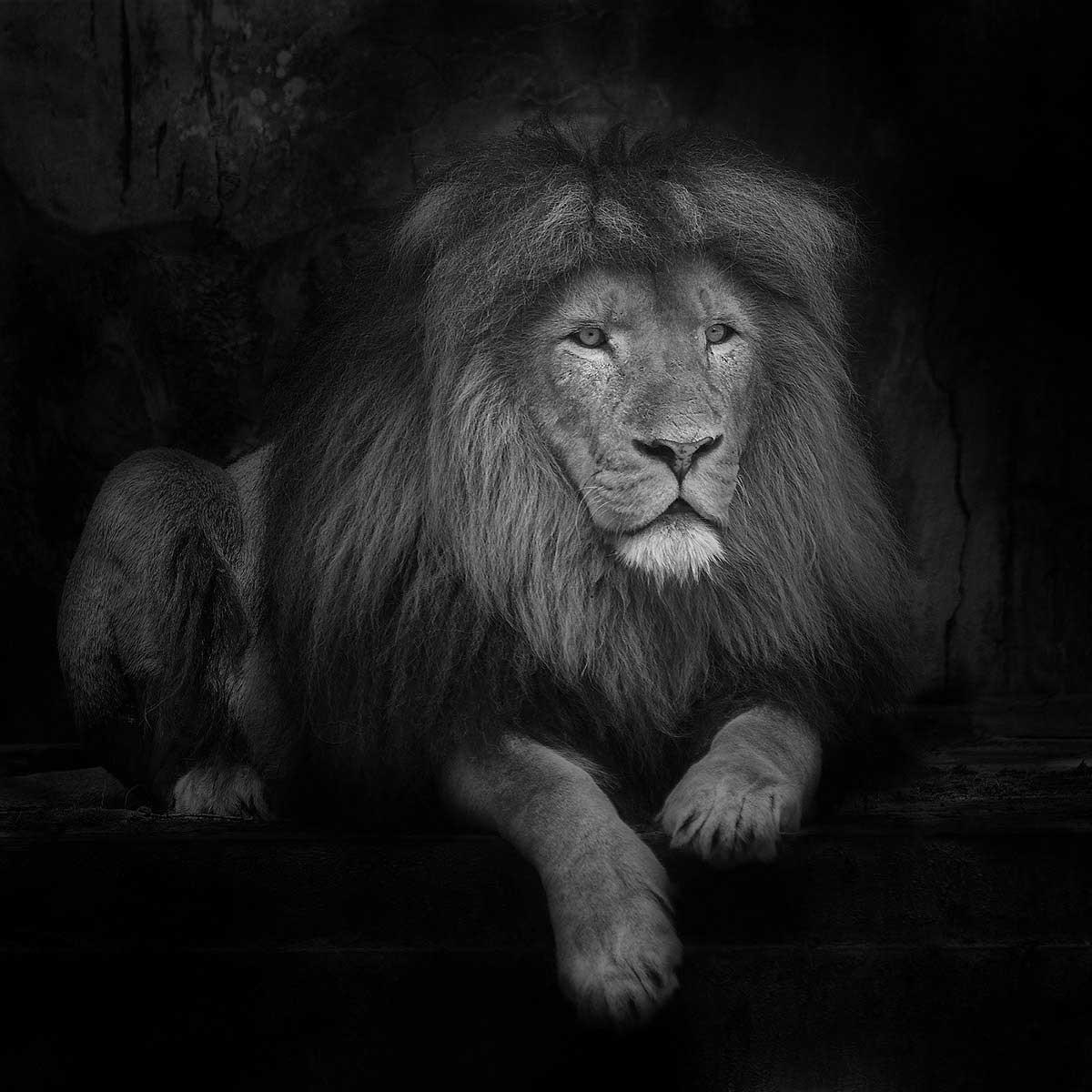 Ruud-Peters---Royalty-at-Ease