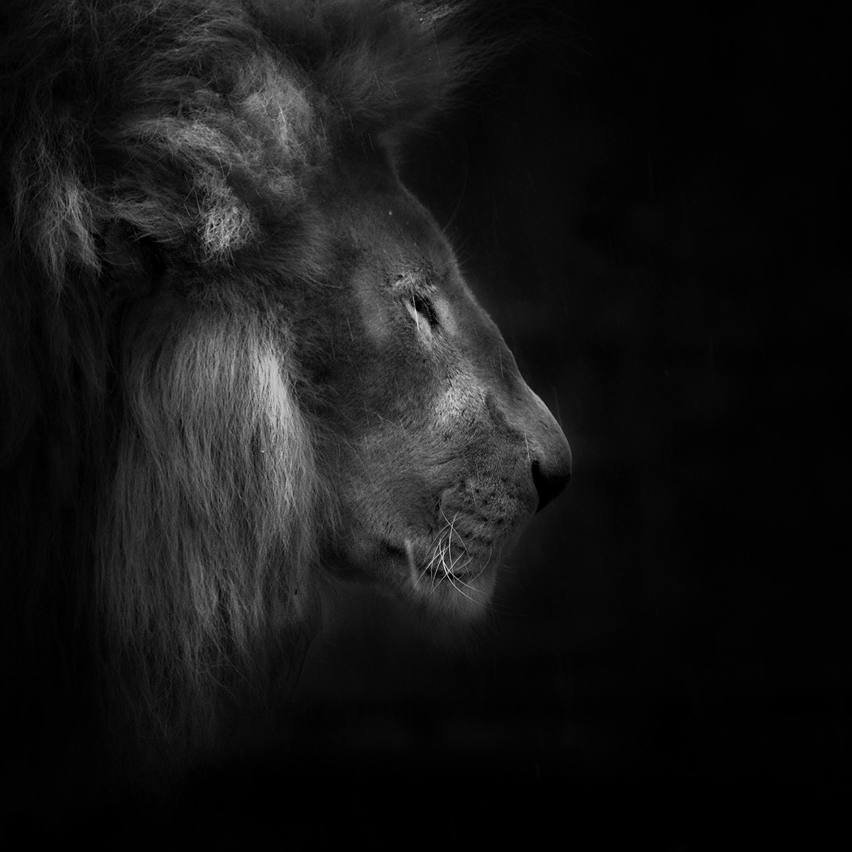 Animal Portrait | Ruud Peters