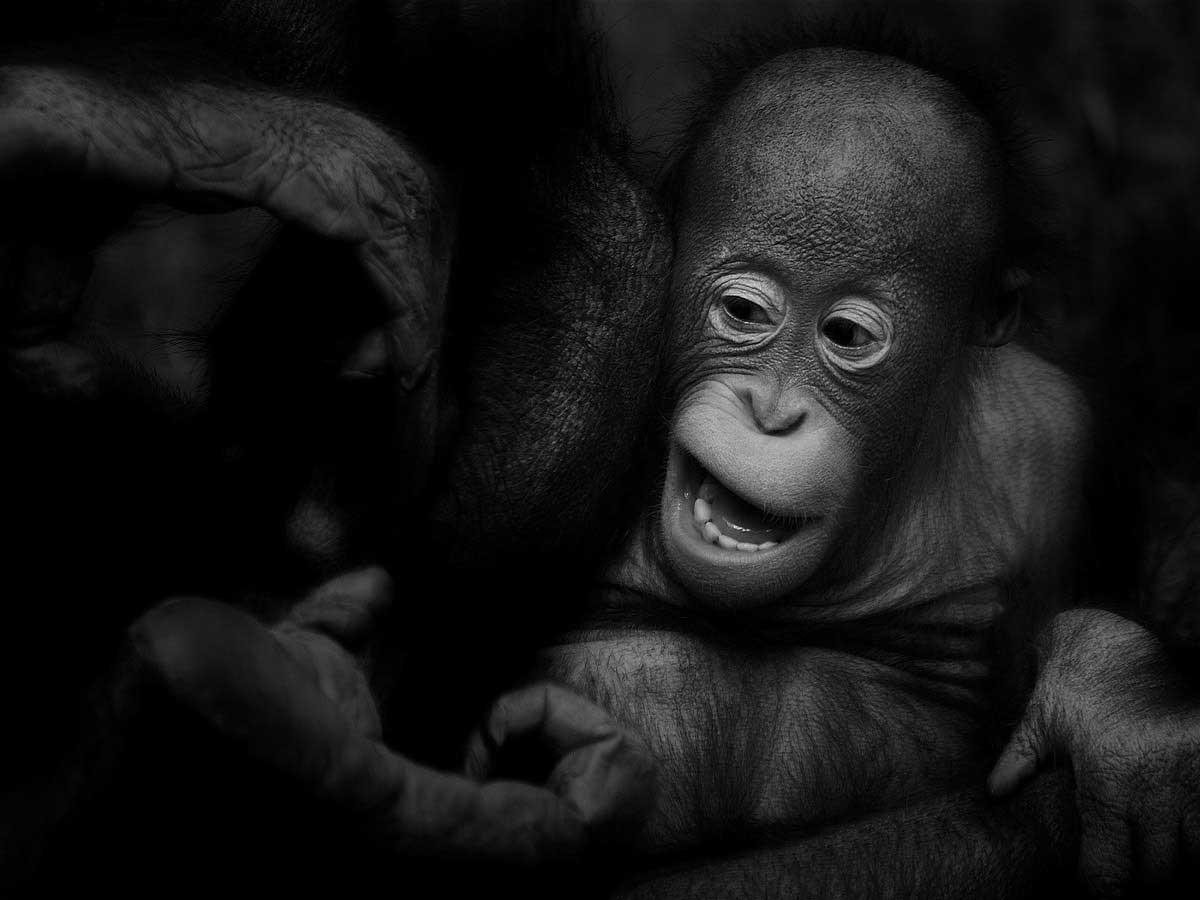 Ruud-Peters---cute