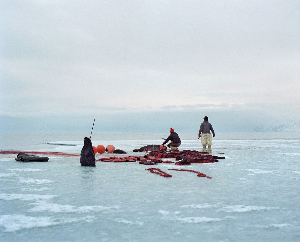 At the edge of the sea ice at around 1 a.m., hunters cut up the seals brought back by the boat after the hunt. The pieces are later shared out between the hunters, and left on the ice to freeze overnight. All the meat from the hunted animals is eaten, and their skins used. The camp eventually fell asleep at around 3 a.m. amid the ceaseless howling of dogs and cracking ice.