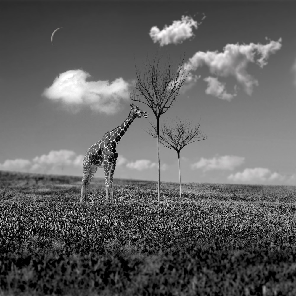 Tricked Again by Fake Trees | Surrealism in Black & White | Marc Ward