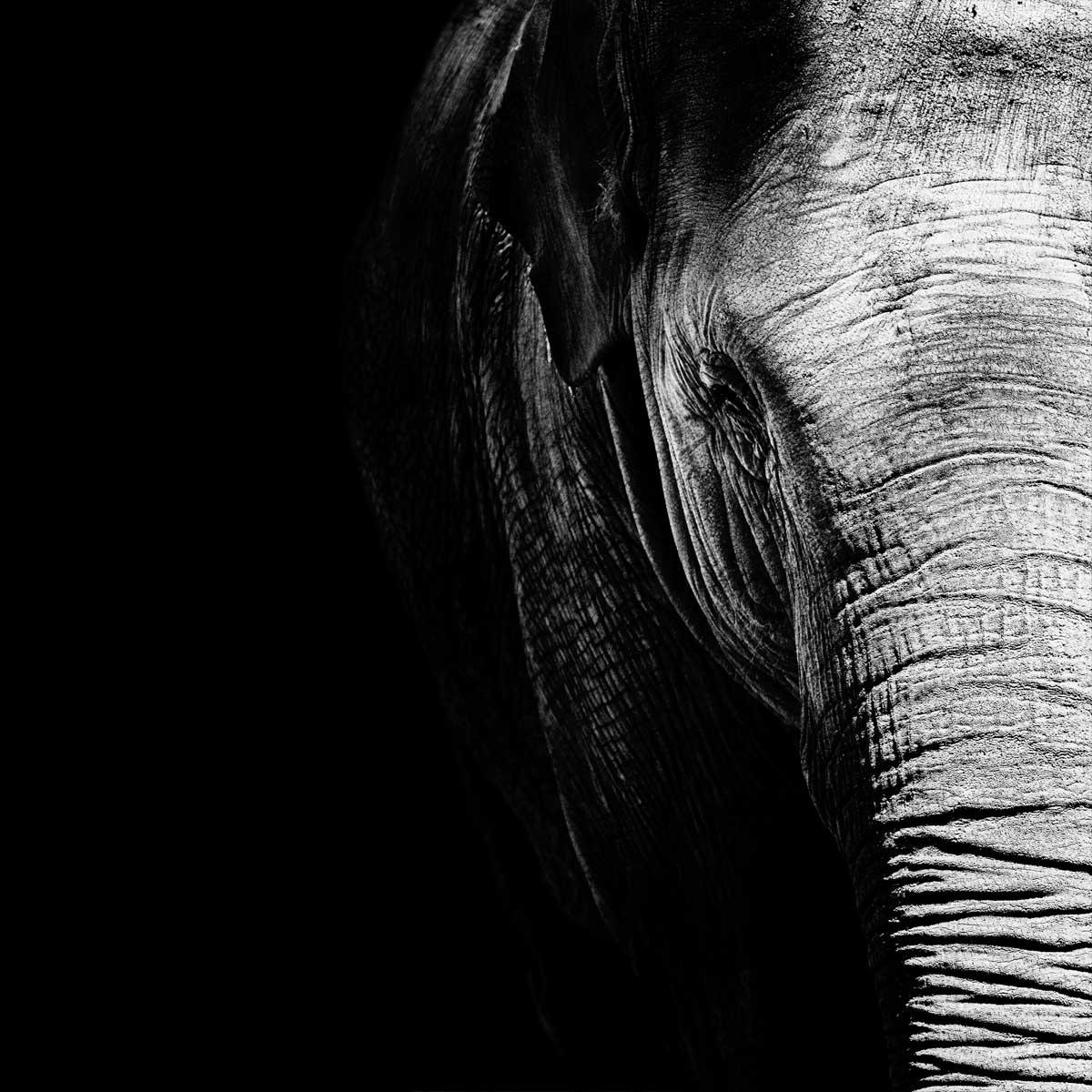 05-Elephas-Maximus