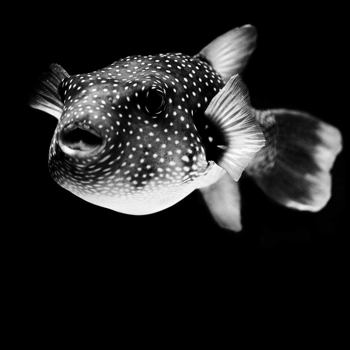 white-with-black-spot-pictures-rane-mokkar-xxx