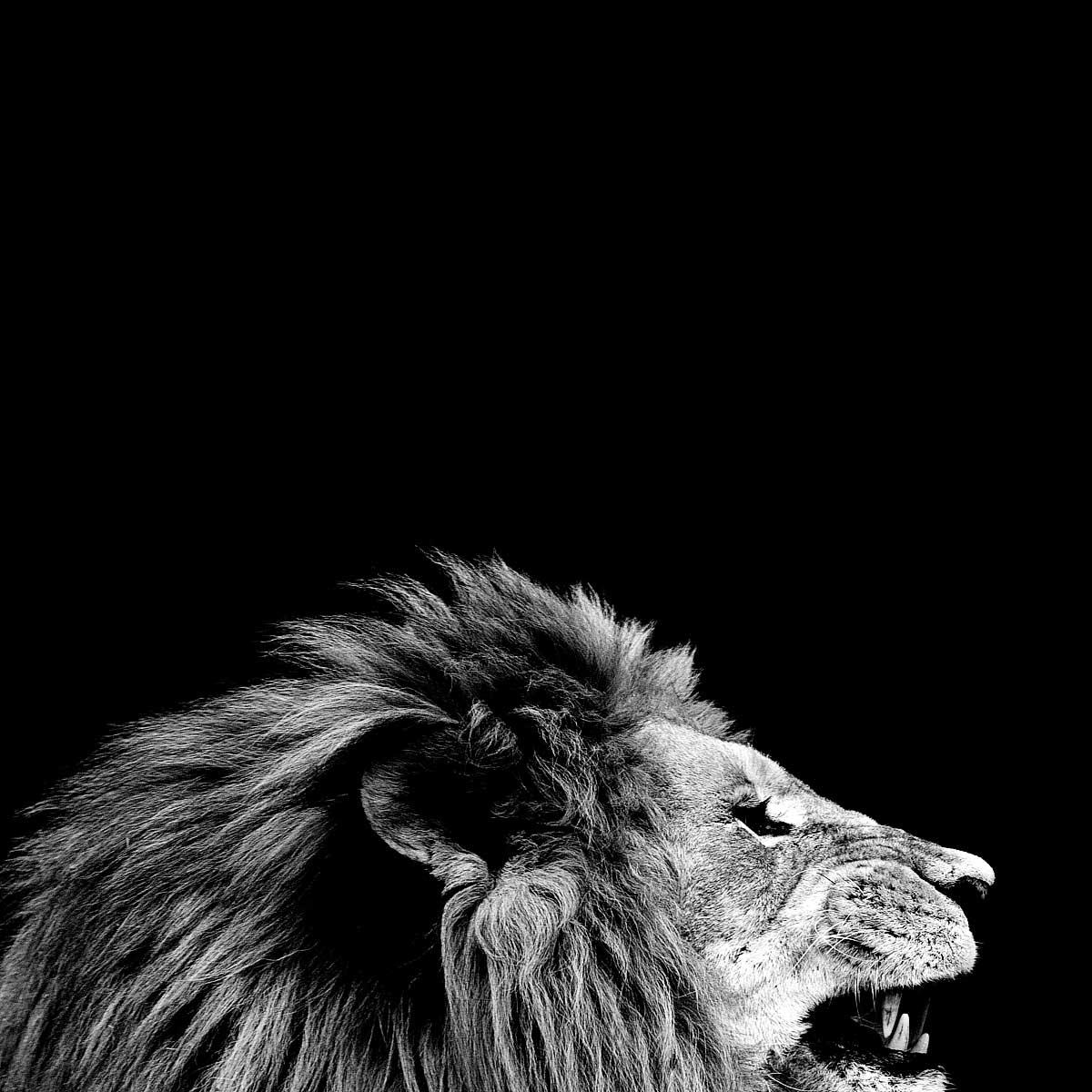 11-King
