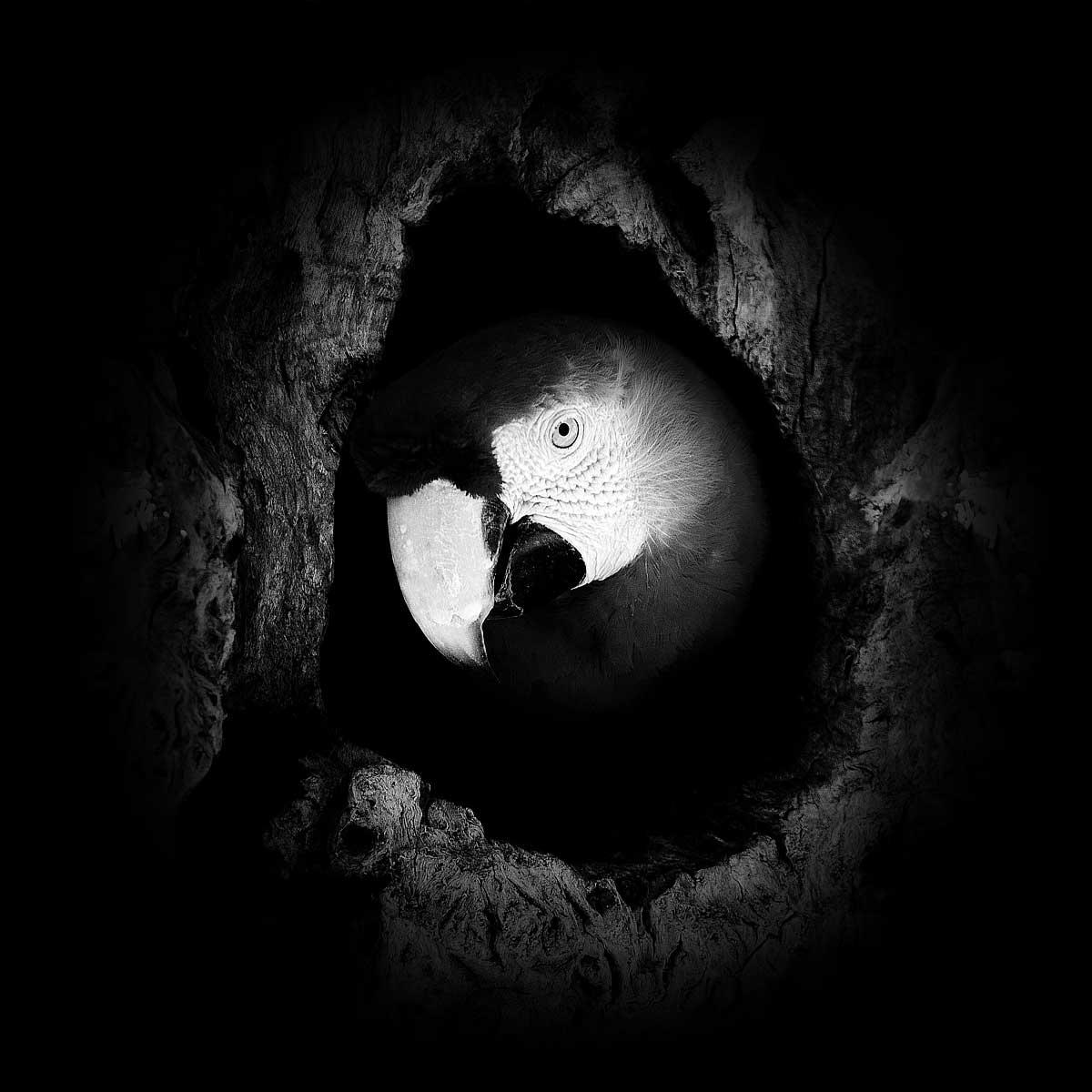Dark Zoo | Nicolas Evariste