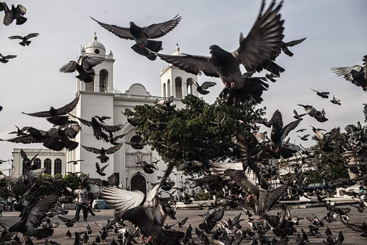 San Salvador, El Salvador-May 2016: Pigeons storm the square in front of the Metropolitan Cathedral of San Salvador, where 44 people were killed at the funeral of Archbishop Óscar Romero who was assassinated while giving mass in another small chapel in 1980. Pregnant women in today's El Salvador face a whole host of challenges from the threat of the mosquito born illness, Zika which has been linked to the grave condition of microcephaly in newborns, to the constant threat of gang violence with one of the highest murder rates in the world, to an increasing rape epidemic. However the most important threat to women's reproductive rights is by far the State's criminal ban on abortion. Doctors and nurses are trained to spy on women's uteruses in public hospitals, reporting any suspicious alteration to the authorities and provoking criminal charges which can lead to between 6 months to 7 years in prison. It is the poorer class of women who suffer the most as doctors in private hospitals are not required to report. Roughly 25 women are serving 30 to 40 year sentences on homicide charges for allegedly killing their newborn children. Although the women's stories, most of which resemble premature births or late term miscarigaes are often dismissed in trials, laced with moral accusations, based little on the consitution and scientific facts. ©Nadia Shira Cohen