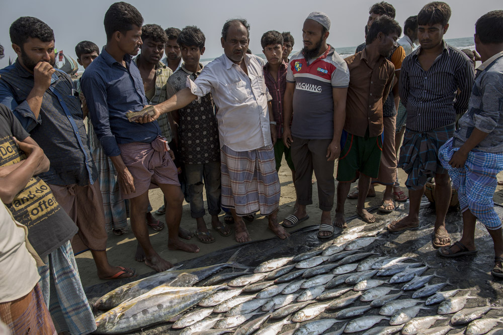 A fish wholesaler buys fish at the lowest price in Teknaf, Cox's bazar. Fishing is one of the main sources of food and livelihood for the Rohingya refugees; however they do not get a fair price for their labor or their catch.