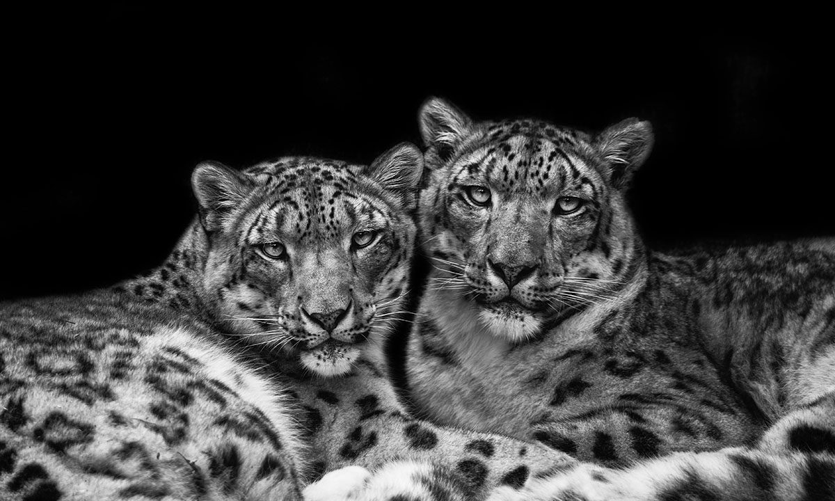 Threatened species; The Ambassadors by Abbey Bratcher