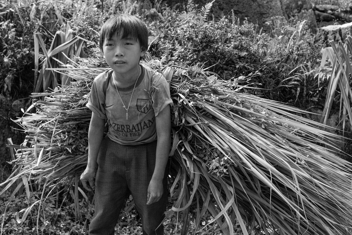A boy is carrying home his crop, that will serve as food for the family's animals. Cane is one of the most common agricultural products in Ha Giang province. Because of its karst topography in certain areas it is very difficult to cultivate rice or grow vegetables.