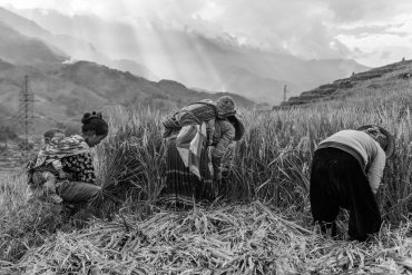 Three generations are harvesting the family's rice, that will serve them as food for the coming year. Children are an important work force for poor families, who help earning the income.