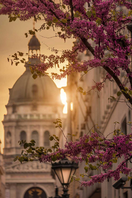 Spring-in-Budapest