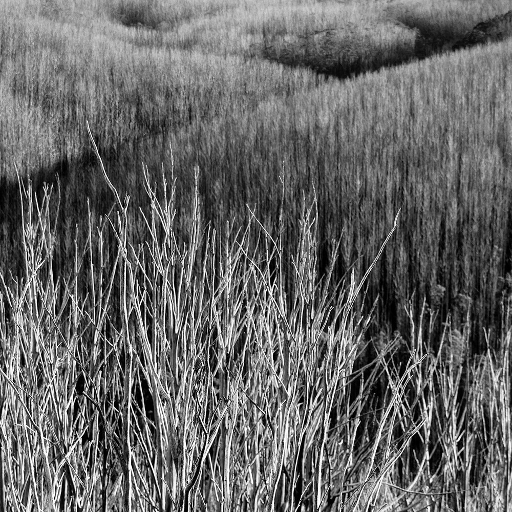 Abstraction | Mihai Florea