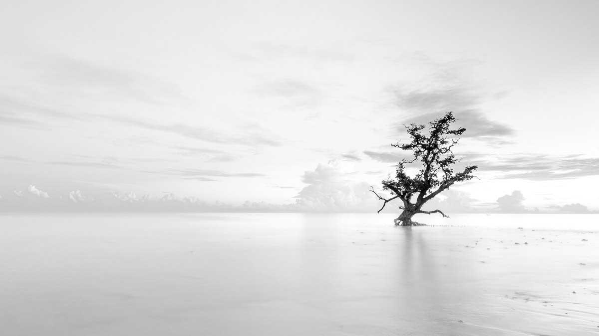 Trees | João Galamba
