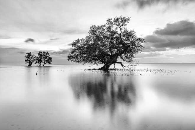 Trees by João Galamba