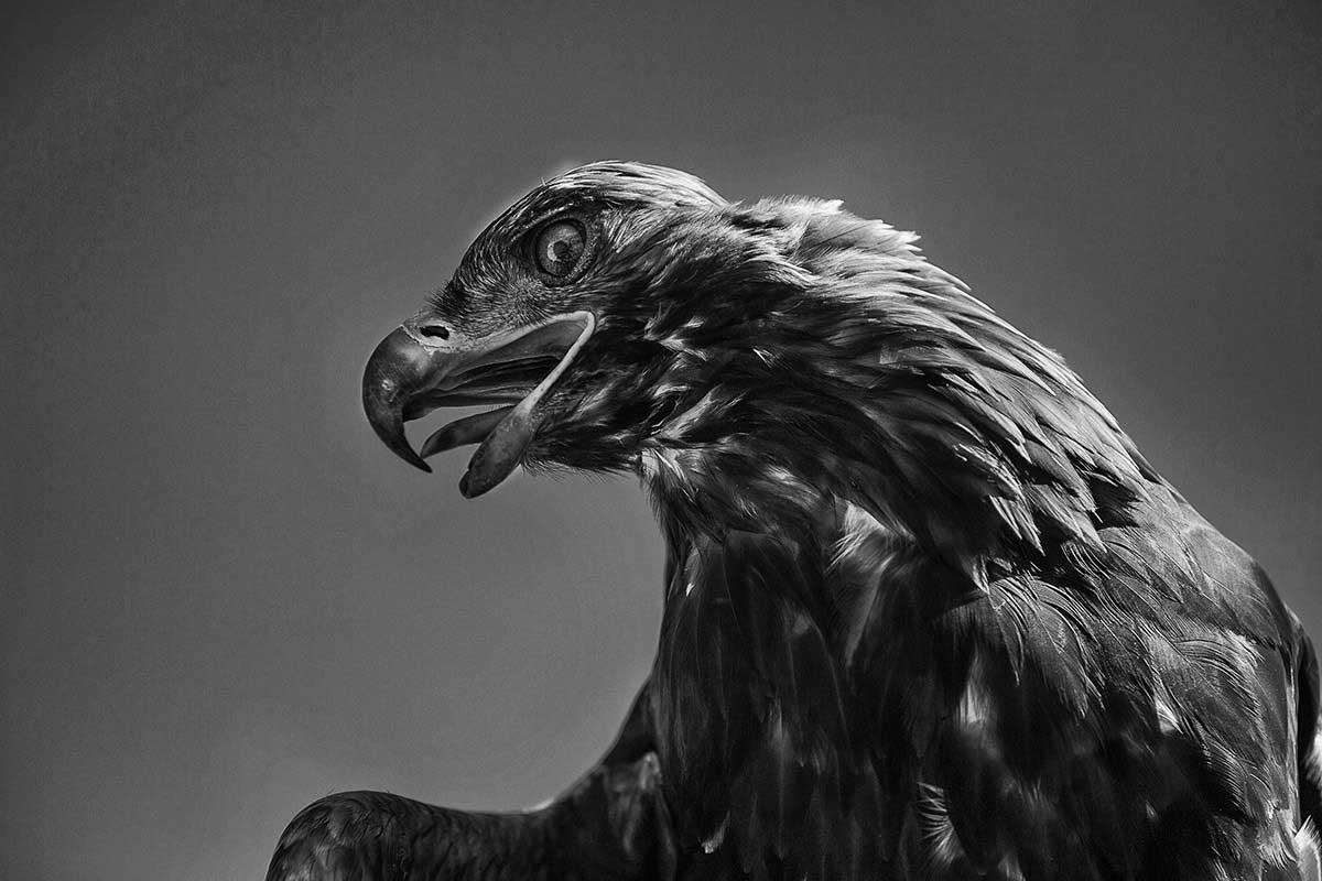 KAZHAK-EAGLE-HUNTER-&-GOLDEN-EAGLE-FESTIVAL--5