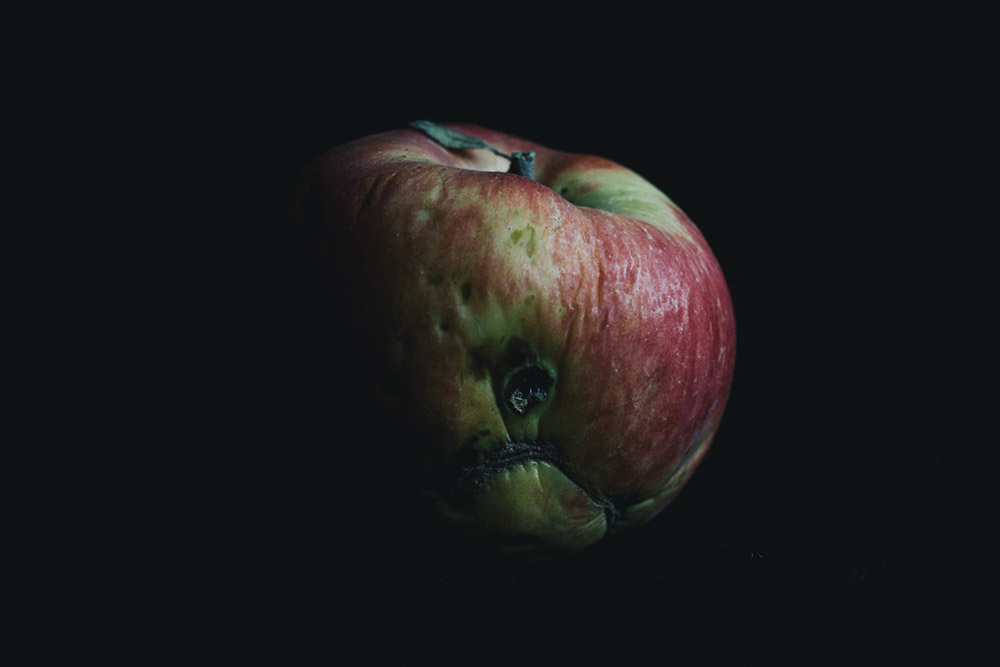Portrait of a contaminated apple. Food is consumed by the inhabitants of the conominated areas near Chernobyl.