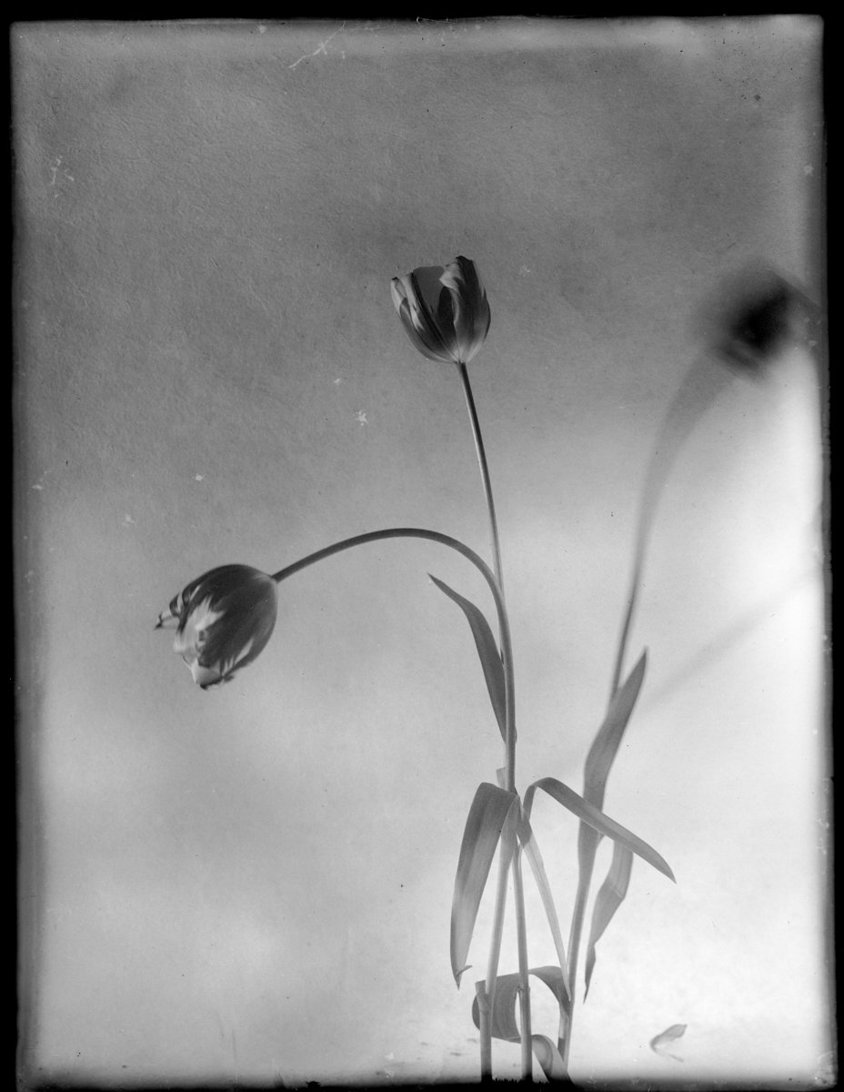 Reflections on Beauty and Fragility | Margrieta Jeltema