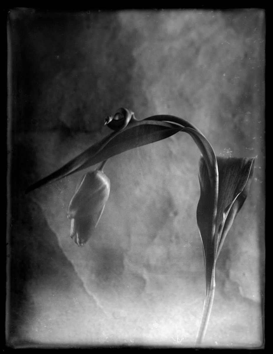 m.jeltema_my heart of glass_07