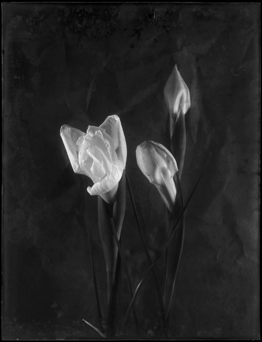 m.jeltema_my heart of glass_11