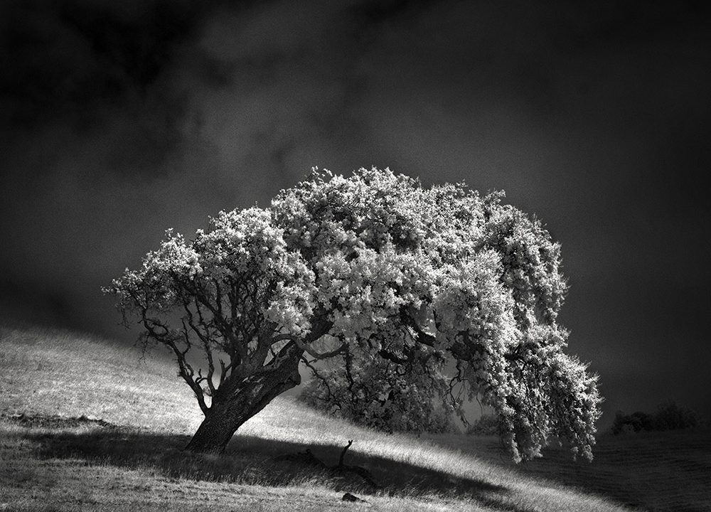 Infrared Silence Series by Nathan Wirth