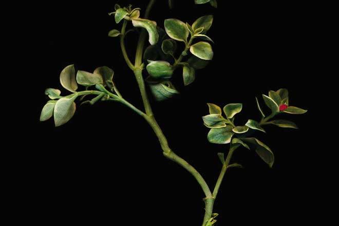 Herbarium by Áine