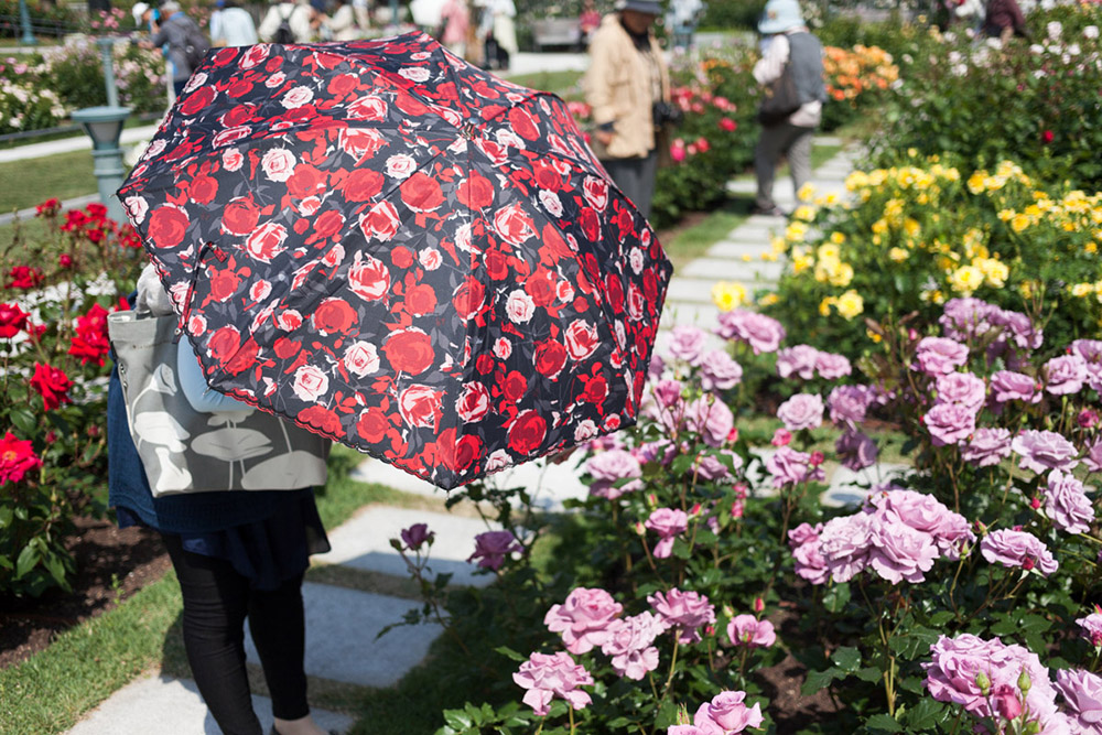 ... Rose Garden | Takayuki Narita ...