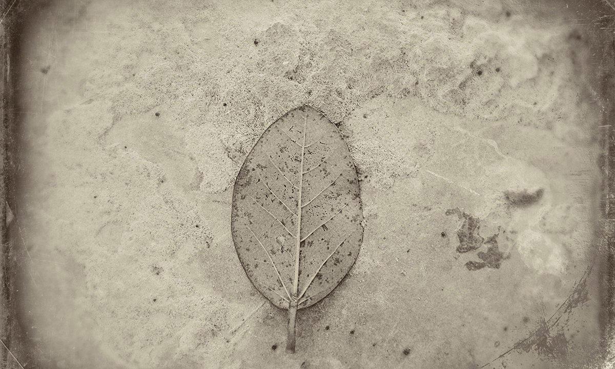 The Last Leaf-An Unfinished Elegy by Debmalya Ray Choudhuri