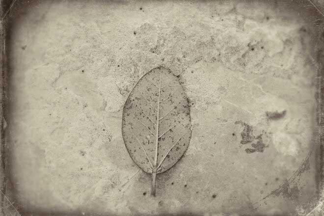 The Last Leaf-An Unfinished Elegy by Debmalya Ray Choudhuri