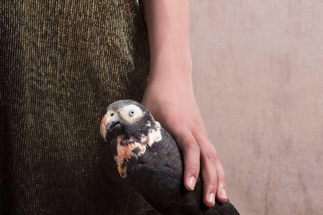 Birds & Plastics by Alice de Kruijs