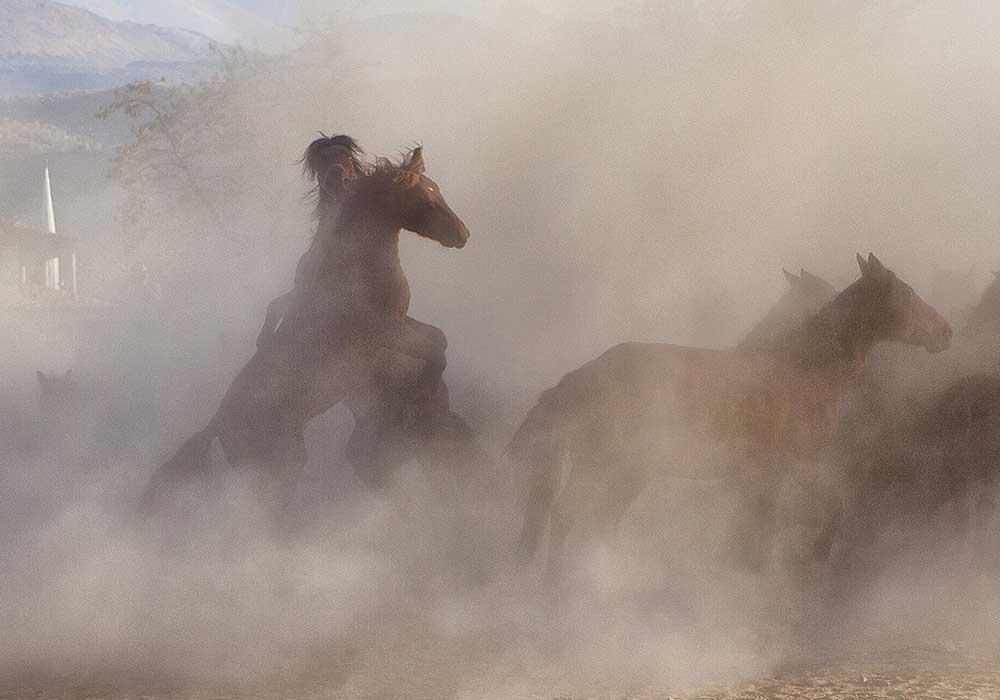 Wild Horses by Emel Karakozak