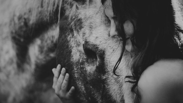 The elegance, power and grace of the horses by Pia Fabienke