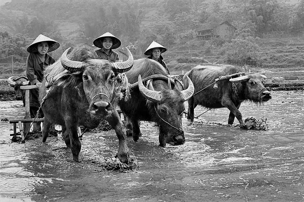 Vietnamese We – Beyond divides by Huy Trang Bùi