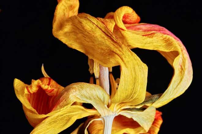 Past beauty flowers by Heiko Römisch