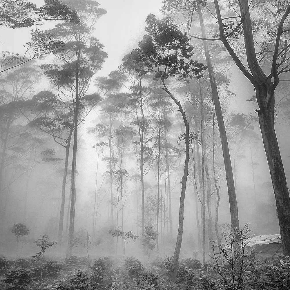 Altitude | Hengki Koentjoro