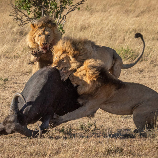 Teaching photography in Africa by Nick Dale