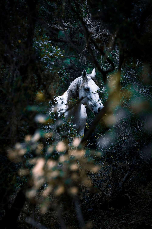Pearl | Ogulcan Arslan