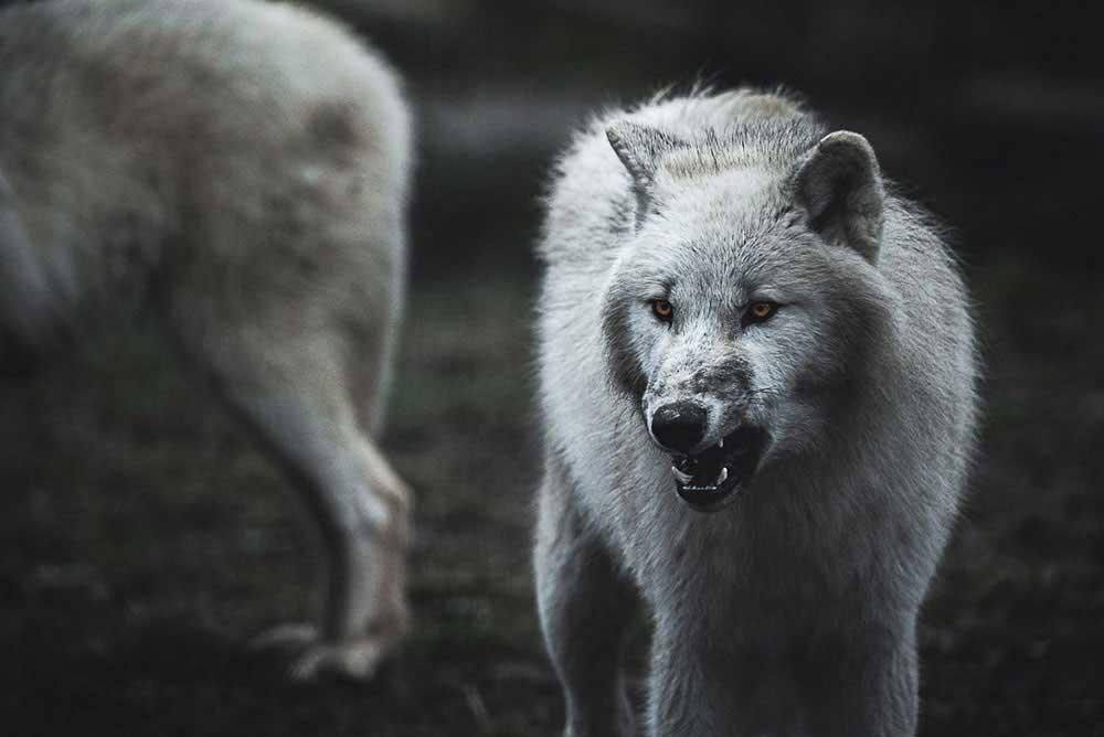 Spirit of the north | Alexandre De Melas