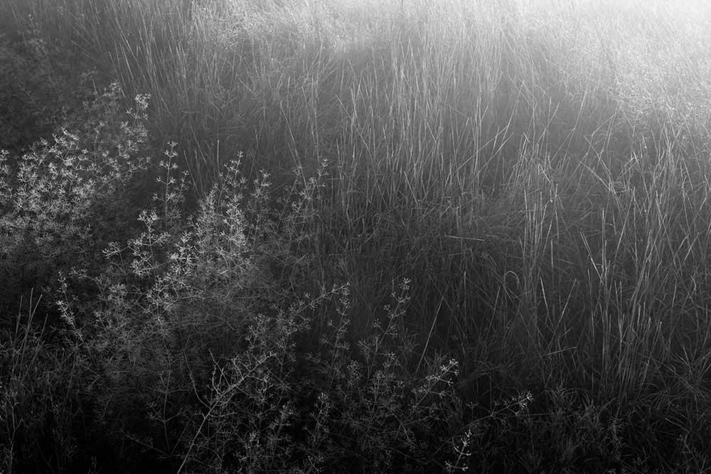 Gardens of Oblivion | Panos Charalampidis and Mary Chairetaki