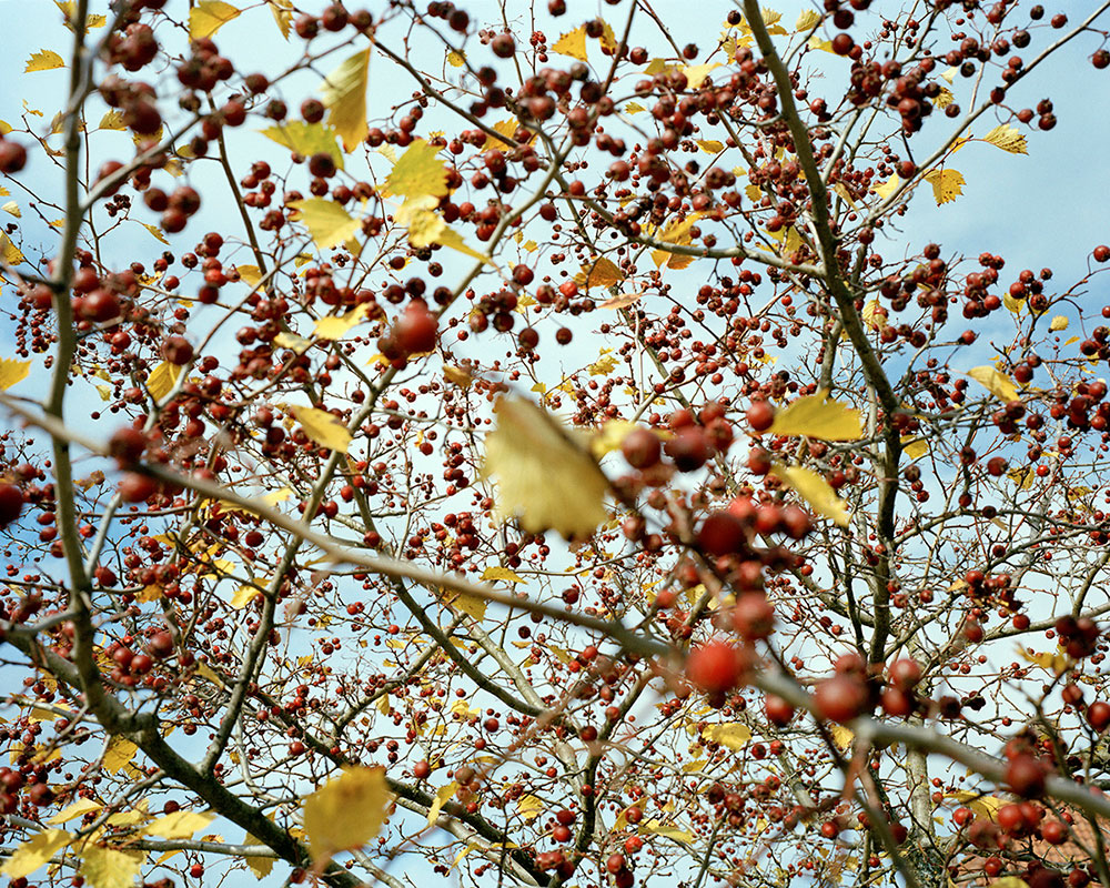 A Conversation with Nature | Marius Schultz