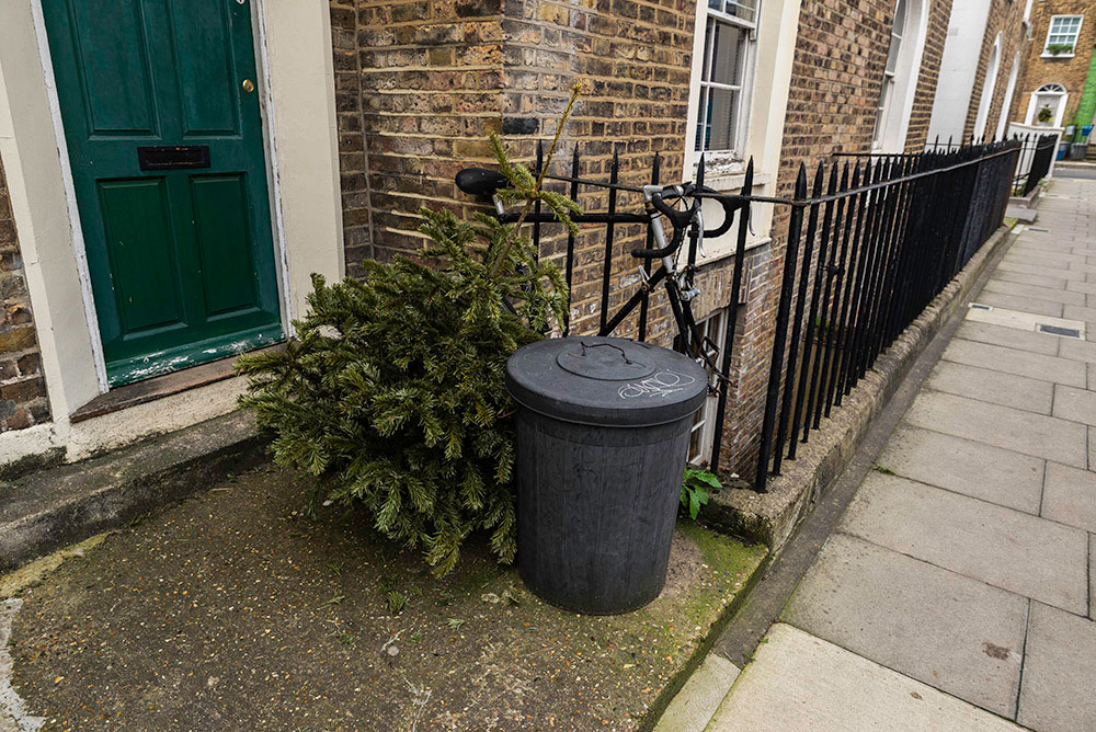 Christmas trees | Seigar