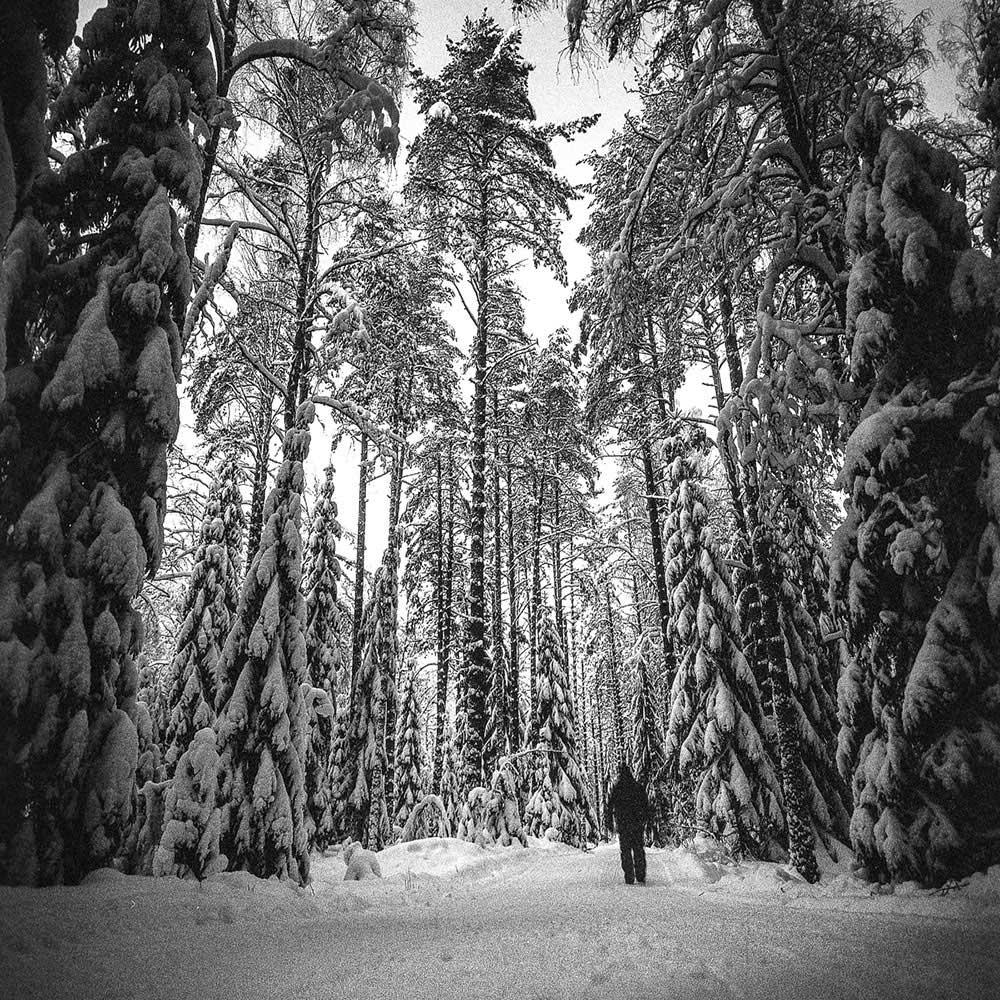 Winter forest | Ari Jaaksi