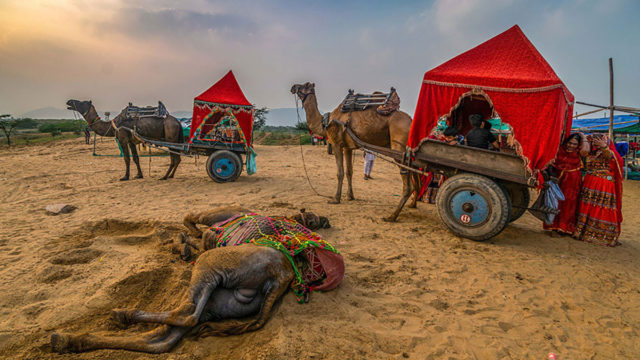 Pushkar Fair- A Colourful Journey by Pritam Dutta