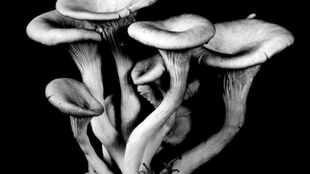 Still Life – Mushrooms by Dale M. Reid