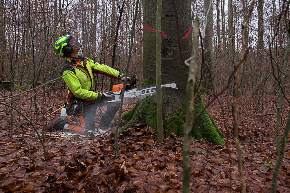 Forests : Stäffele 1/2 Joachim Feigl