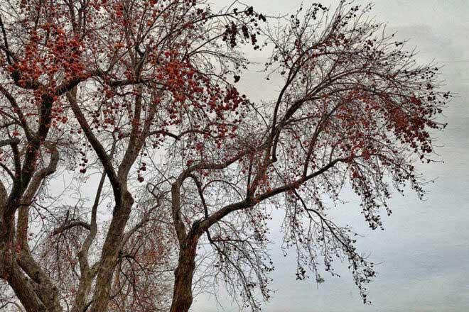 Stillness : Trees by Wendi Schneider