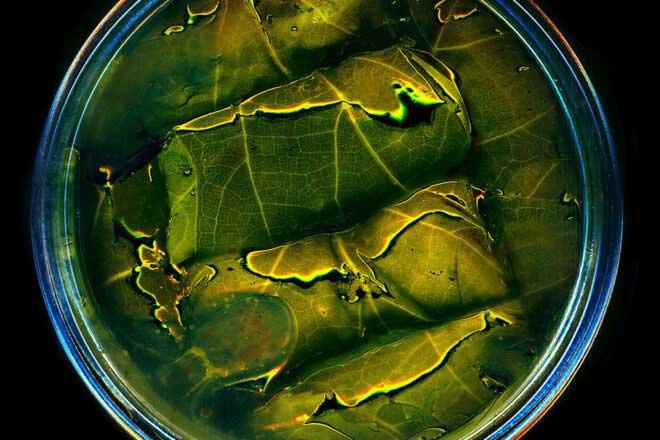 Canned food by Anne Mason-Hoerter