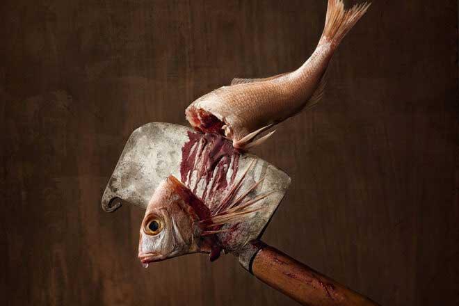 Marine Species by Wesley Dombrecht