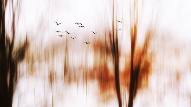 https://www.dodho.com/wp-content/uploads/2021/09/4_Winterscapes_Shake-Blur-and-A-River-of-Emotions-640x360.jpg